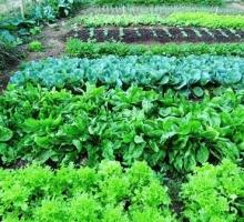 Horta orgânica contribui para alimentação saudável na Estância Mimosa