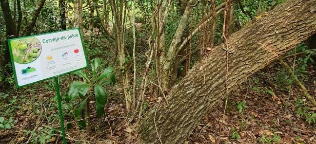 Placas de identificação de espécies de árvores são instaladas na RPPN Estância Mimosa