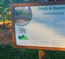 Círculo de Bananeiras na Estância Mimosa Ecoturismo